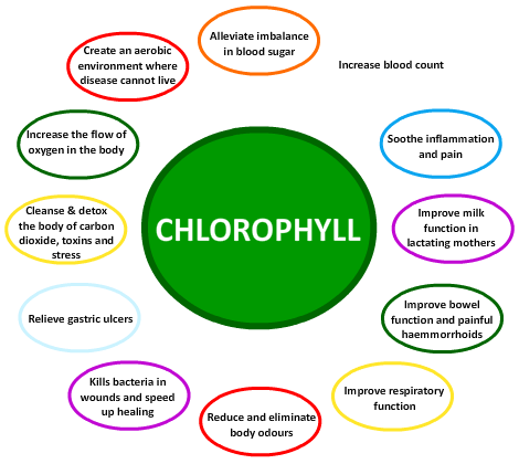 falling in love with a chlorophyll-rich diet, Skeleton