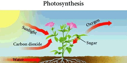 phtosynthesis and respiration What's the difference between cellular respiration and photosynthesis photosynthesis and respiration are reactions that complement each other in the environment.