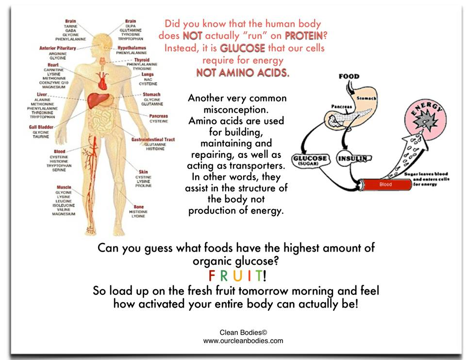 choosing the safest fats, carbs, and proteins, Human Body