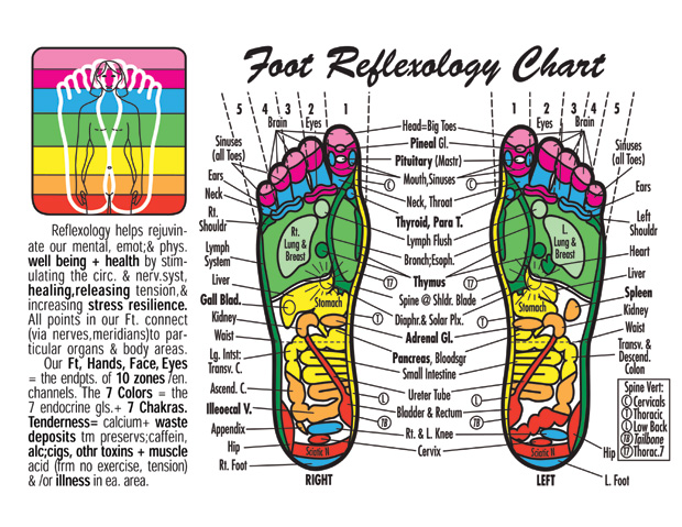 Revered image with regard to printable reflexology foot chart