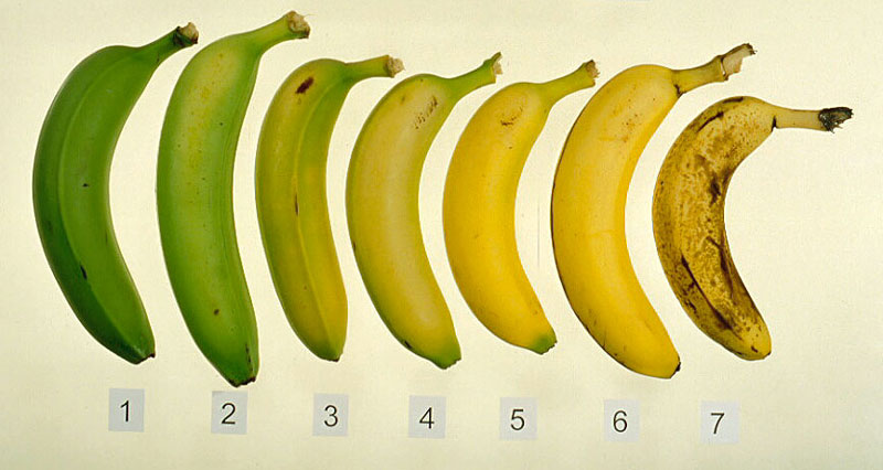 Stages of Bananas Ripening