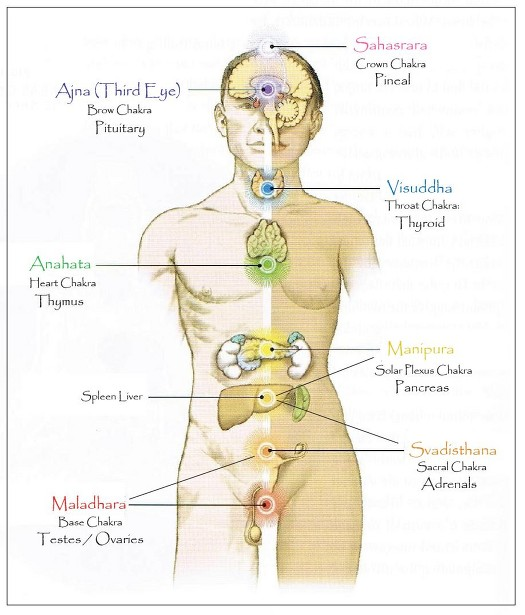 Why You Need To Know About Your Chakras Carla Golden
