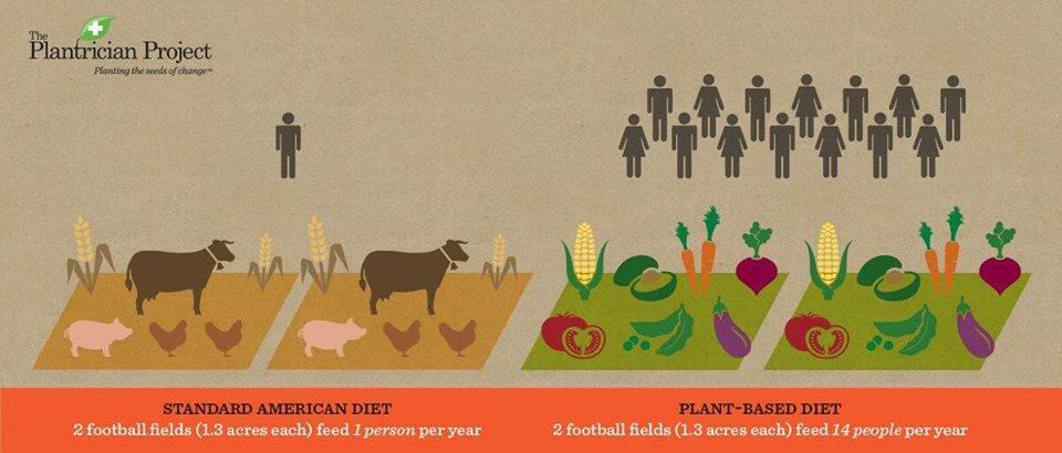 Bilderesultat for meat land consumption